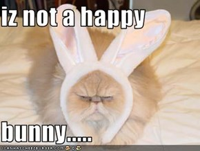 iz not a happy   bunny.....