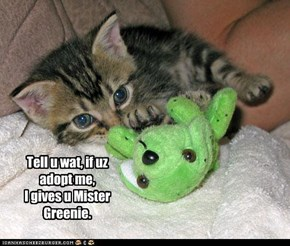 Tell u wat, if uz adopt me, I gives u Mister Greenie.