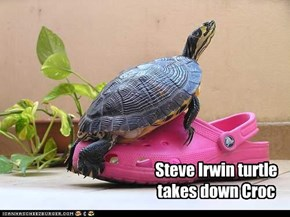 Steve Irwin turtle takes down Croc