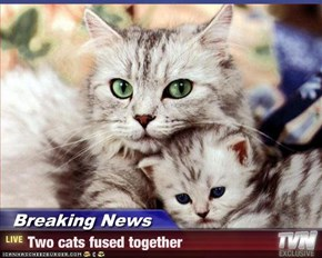 Breaking News - Two cats fused together