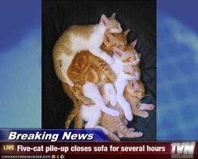 Breaking News - Five-cat pile-up closes sofa for several hours