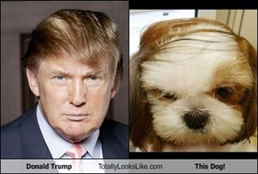 Donald Trump Totally Looks Like This Dog!