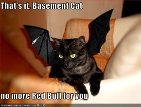 That's it, Basement Cat  no more Red Bull for you