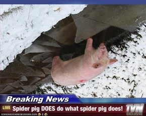 Breaking News - Spider pig DOES do what spider pig does!