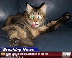 Breaking News - Wide Spread Cat Nip Addiction on the rise More at 11...