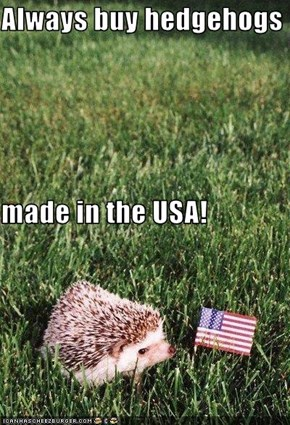 Always buy hedgehogs made in the USA!