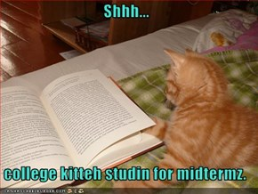 Shhh...   college kitteh studin for midtermz.