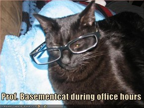 Prof. Basementcat during office hours