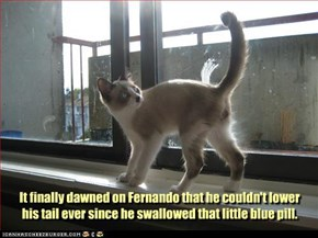 It finally dawned on Fernando that he couldn't lower his tail ever since he swallowed that little blue pill.