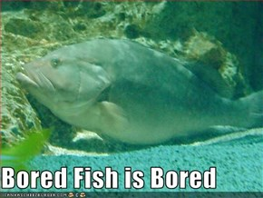 Bored Fish is Bored