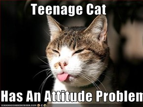 Teenage Cat  Has An Attitude Problem