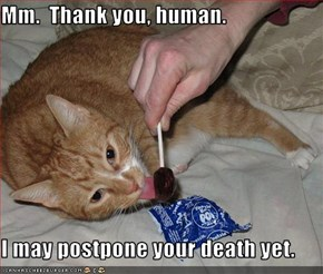 Mm.  Thank you, human.  I may postpone your death yet.