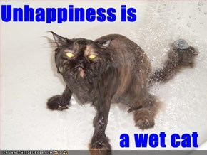 Unhappiness is  a wet cat