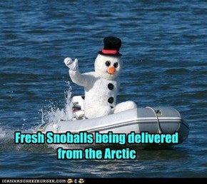 Fresh Snoballs being delivered from the Arctic