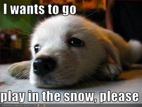 I wants to go    play in the snow, please