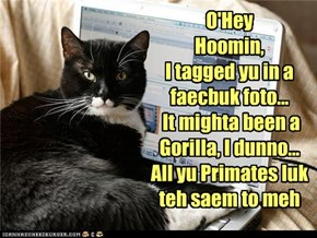 O'Hey  Hoomin,  I tagged yu in a faecbuk foto...   It mighta been a Gorilla, I dunno... All yu Primates luk teh saem to meh
