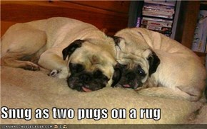 Snug as two pugs on a rug
