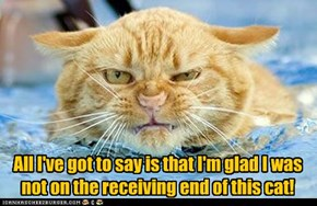 All I've got to say is that I'm glad I was not on the receiving end of this cat!