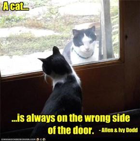 A cat...
