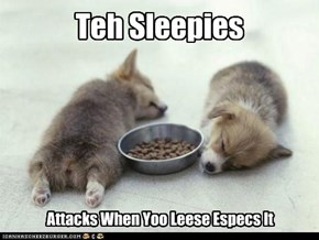 Teh Sleepies