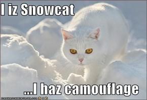 I iz Snowcat  ...I haz camouflage
