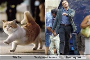 This Cat Totally Looks Like Strutting Leo