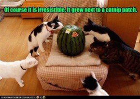 Of course it is irresistible. It grew next to a catnip patch.