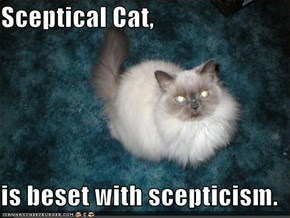 Sceptical Cat,  is beset with scepticism.