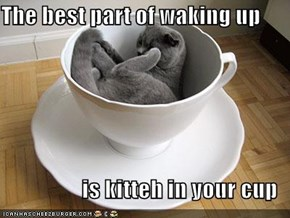 The best part of waking up  is kitteh in your cup