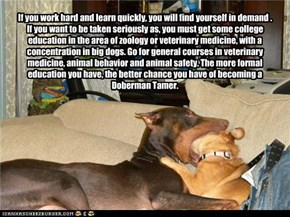 If you work hard and learn quickly, you will find yourself in demand .  If you want to be taken seriously as, you must get some college education in the area of zoology or veterinary medicine, with a concentration in big dogs. Go for general courses in ve