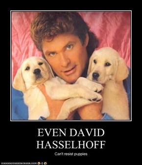 EVEN DAVID HASSELHOFF