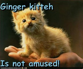 Ginger kitteh  Is not amused!