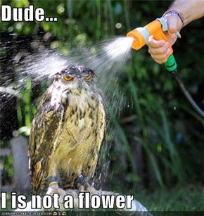 Dude...  I is not a flower
