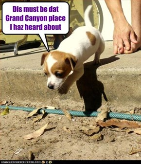 Dis must be dat Grand Canyon place I haz heard about
