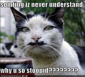 somfing iz never understand  why u so stoopid????????