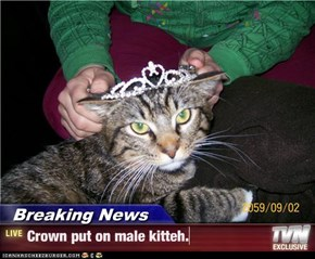 Breaking News - Crown put on male kitteh.