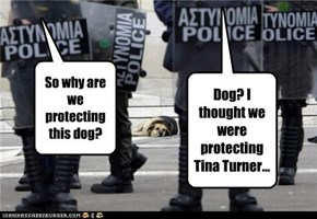 So why are we protecting this dog?