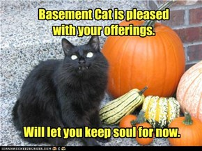 Basement Cat is pleased  with your offerings.
