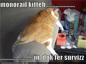 monorail kitteh.....................  ....................... in  dok fer survizz