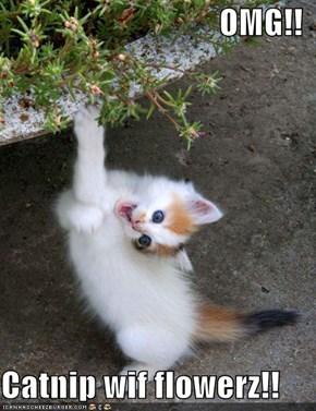 OMG!!  Catnip wif flowerz!!