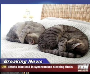 Breaking News - kittehs take lead in synchronised sleeping finals