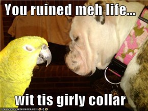 You ruined meh life...  wit tis girly collar