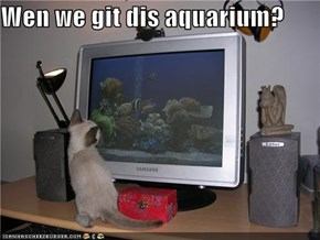 Wen we git dis aquarium?