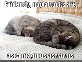 Evidently, nap attacks are    as contagious as yawns