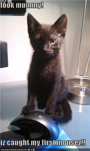 look mummy!  iz caught my first mousez!!