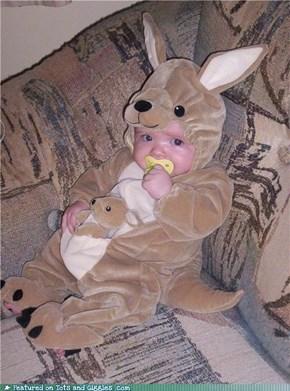 Cutest Little Kangaroo Evah: Joey the Joey