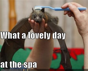 What a lovely day at the spa