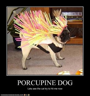 PORCUPINE DOG