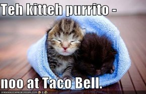 Teh kitteh purrito -  noo at Taco Bell.