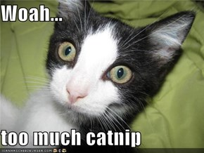 Woah...  too much catnip